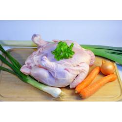 Kuře domácí Farma Zelený...